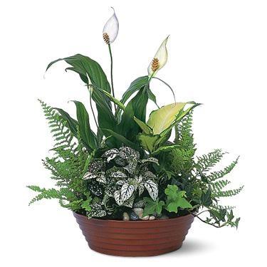 large dish garden - Dish Garden Plants
